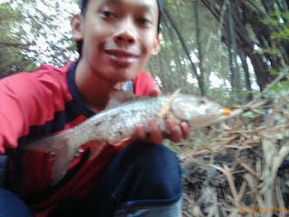 Tips Memancing Ikan Hampala / Palung