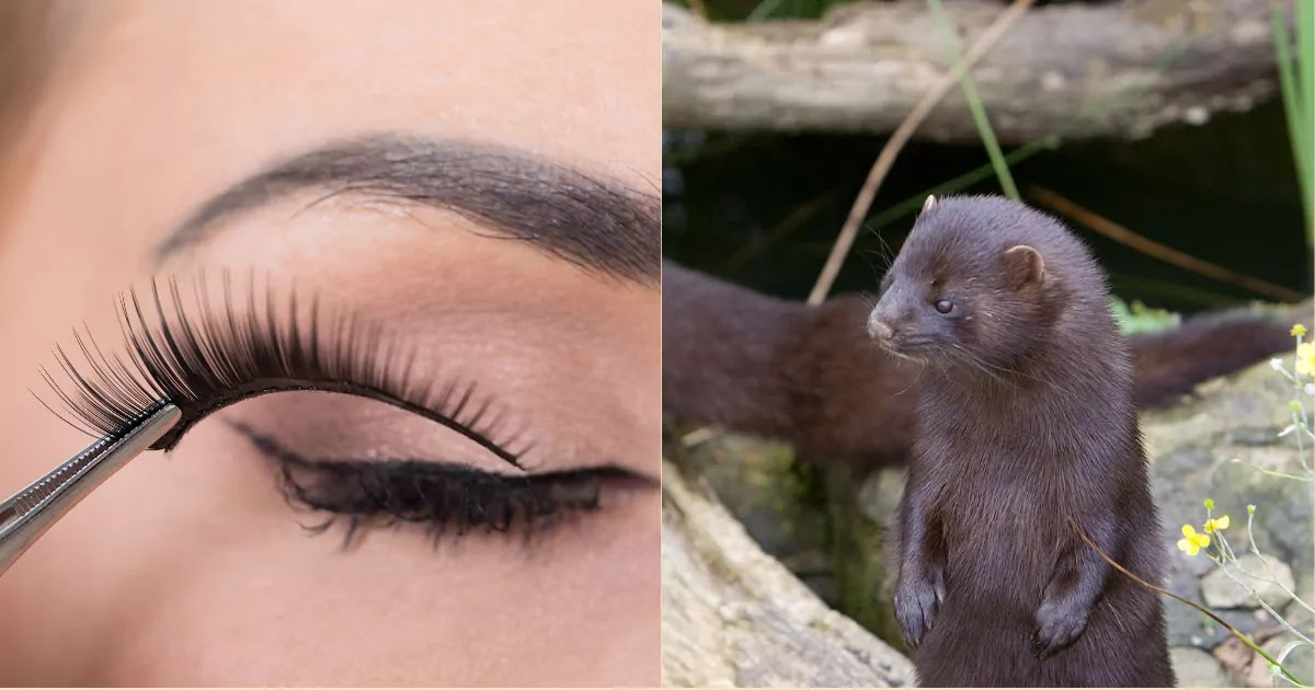 PETA Victory As Sephora Bans Selling Mink Fur Eyelashes After Activists Expose Cosmetic Companies' Terrible Treatment Of The Critically Endangered European Mink