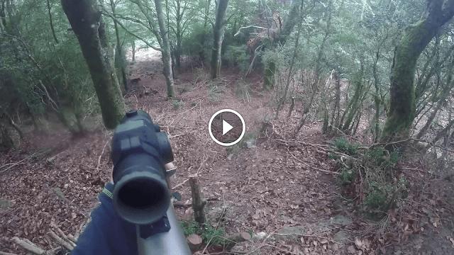 vidéo: superbe tir d'un sanglier