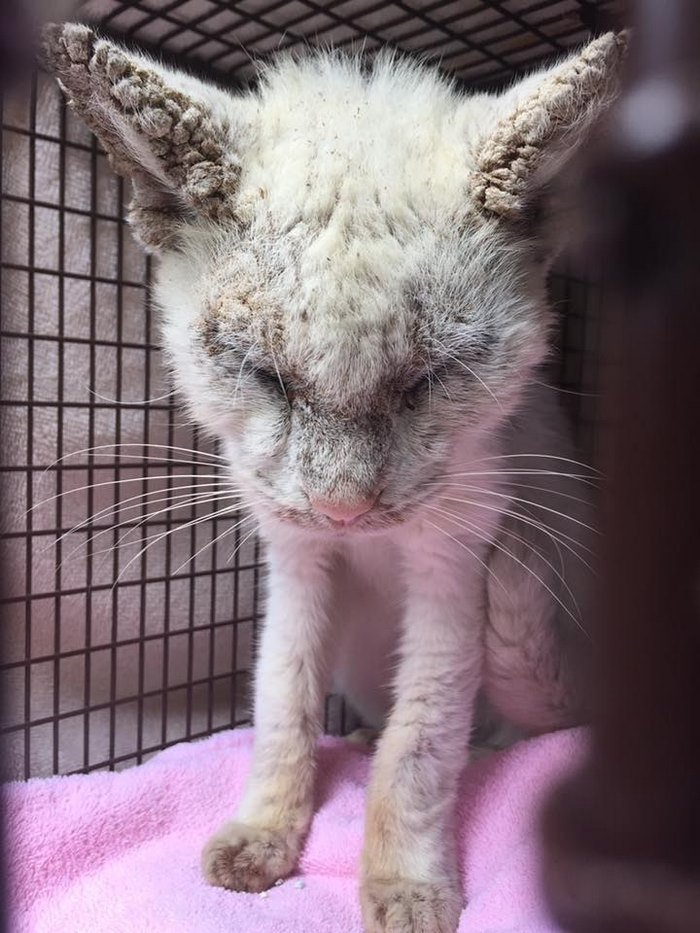 'Blind' Stray Cat Surprises Rescuer After Revealing Incredible Beauty Of His Eyes