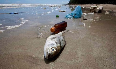 Plastic in the ocean is contaminating seafood
