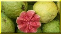 gambar buah jambu, bahasa arab jambu