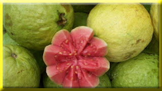 gambar buah jambu batu, jambu biji merah