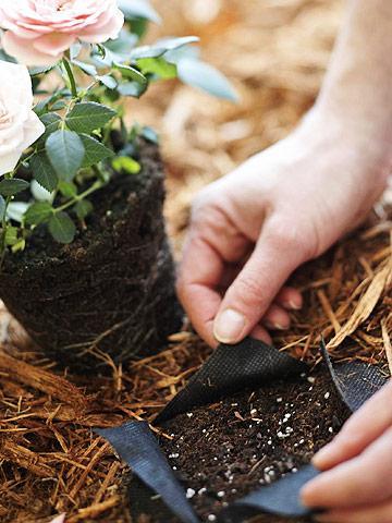 Best Ways to Save Water in Your Garden