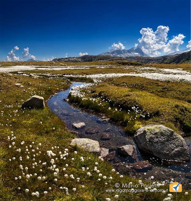 Palude a monte del lago Orsino