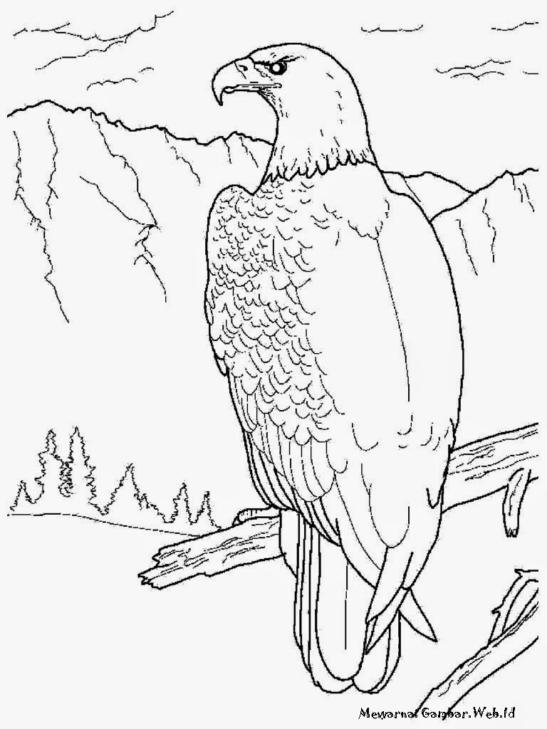 Download Contoh Sketsa Gambar Burung Elang