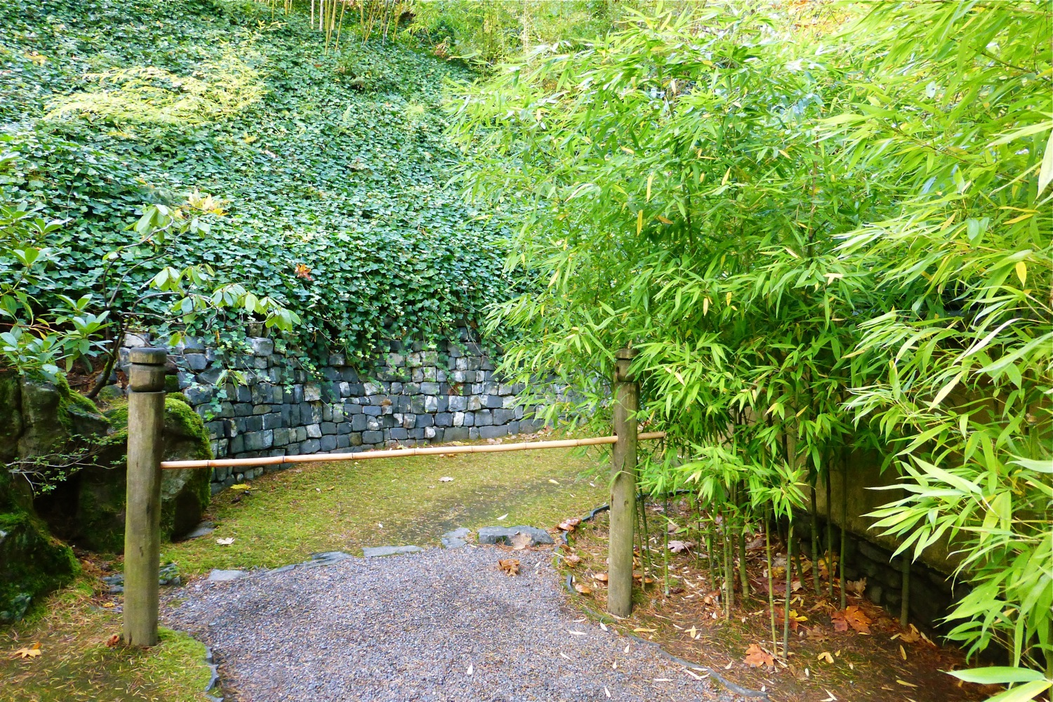 bamboo at Portland Japanese Garden