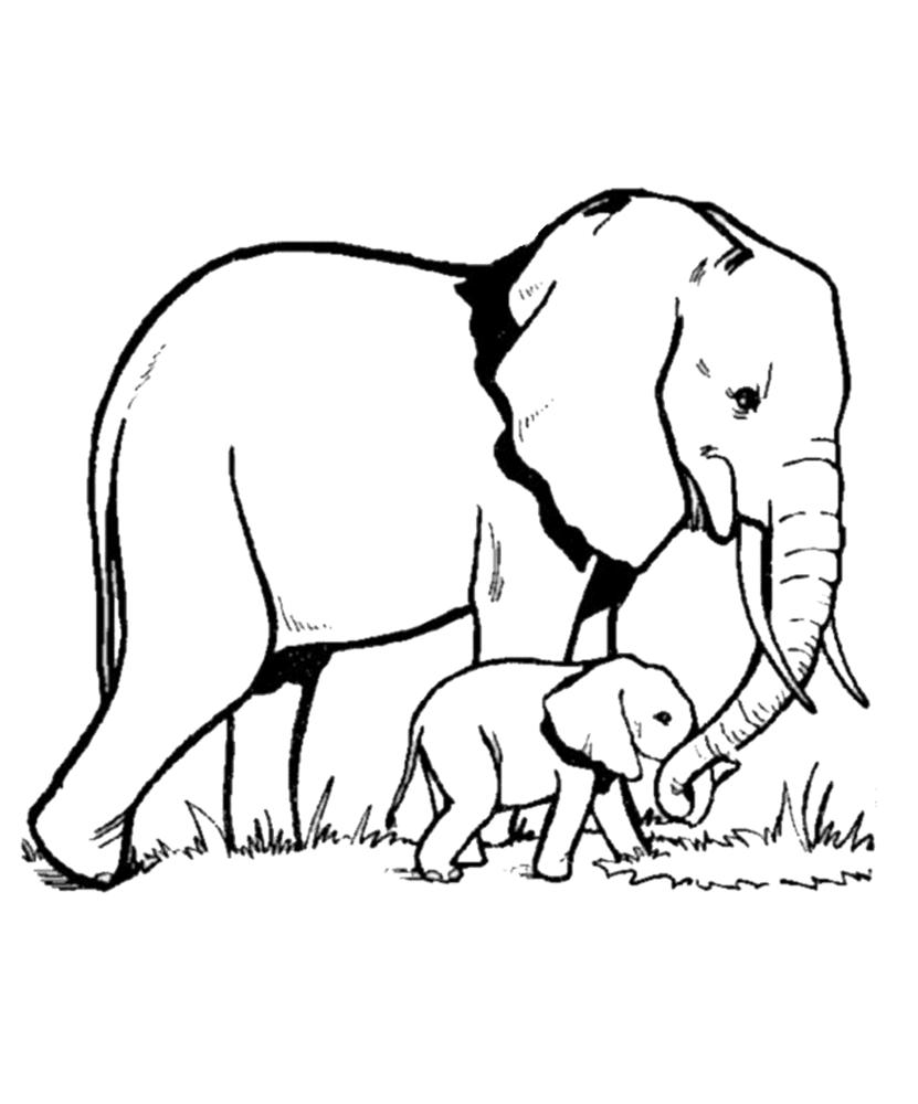 gambar mewarnai gajah 1