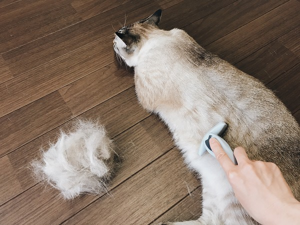 フーリーで猫の毛を刈ってるところ