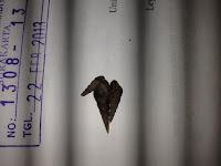 Mengenal Makrobentos Jenis Siput