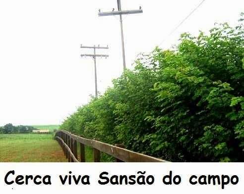 Rw paisagismo cerca viva sans o do campo for Cerca b b