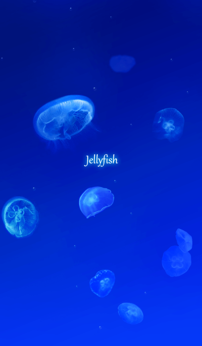 -Jellyfish-