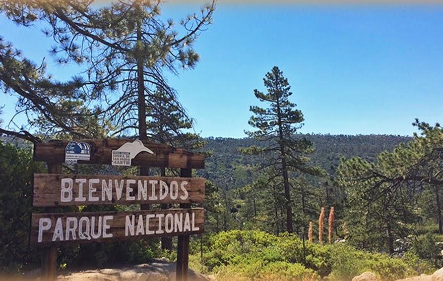 Bienvenidos parque nacional, bosque de pinos en Baja California
