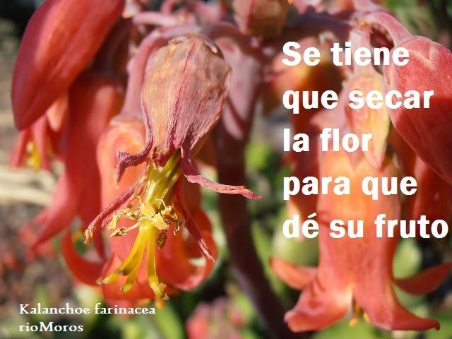Se tiene que secar la flor para que dé su fruto
