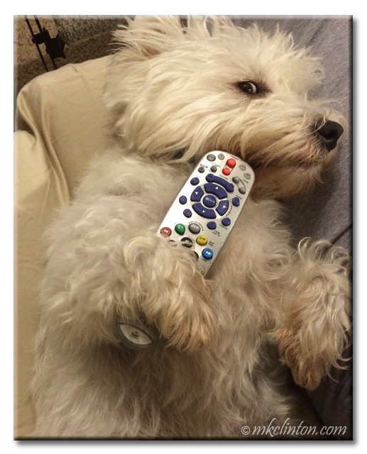 Pierre the Westie lying with television remote.