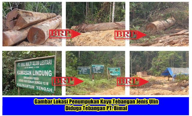 Usut Tuntas Illegal Loging Kayu Ulin PT Bimal di Kawasan Lindung