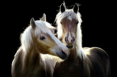 Hermosa Imagen de dos caballos