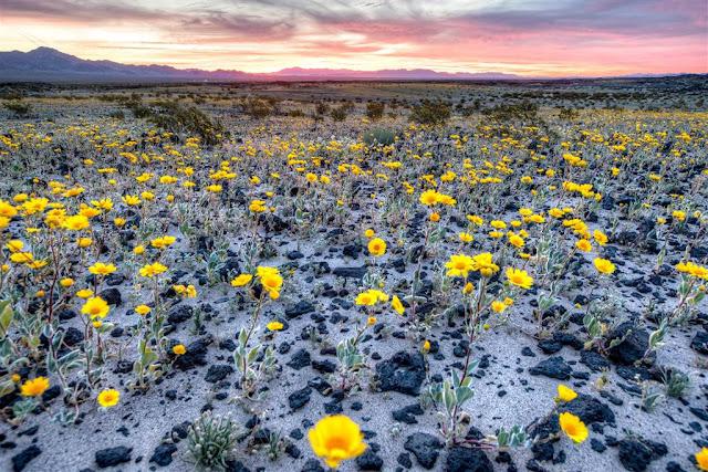Пустельні польові квіти