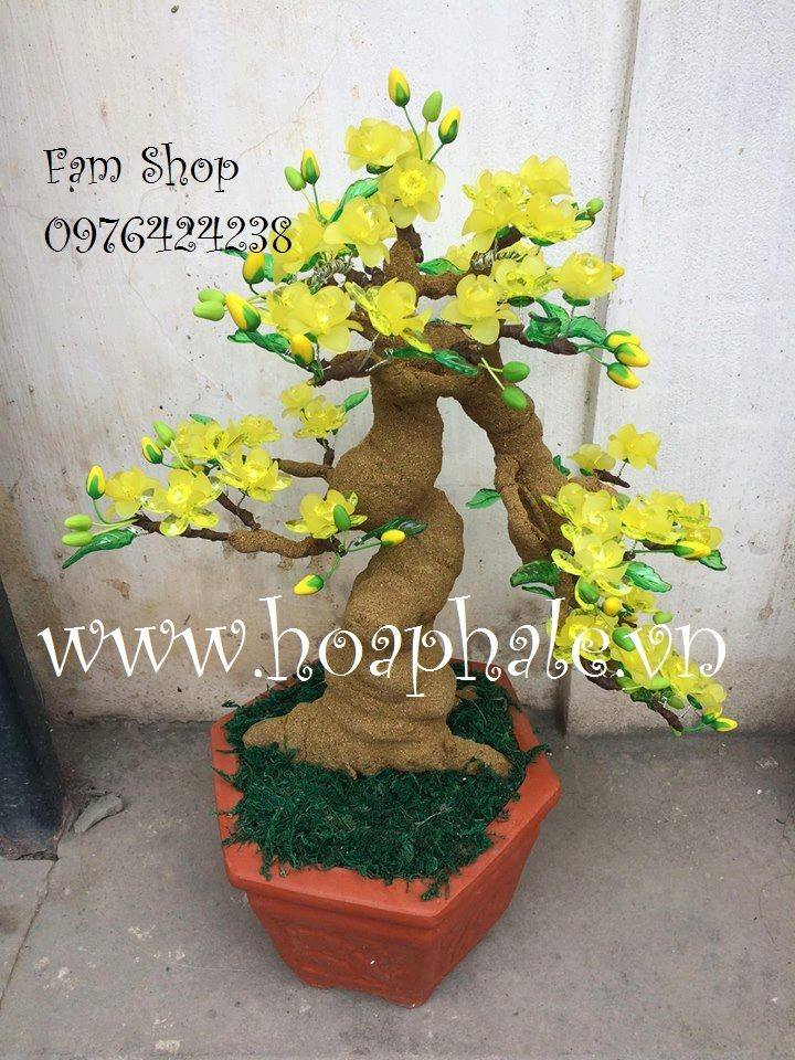 Goc bonsai mai dao the thac do o Vinh Tuy