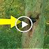 بالفيديو شاهد سمعوا أصوات تأتي من هذه الشجرة ماذا وجدوا فيها