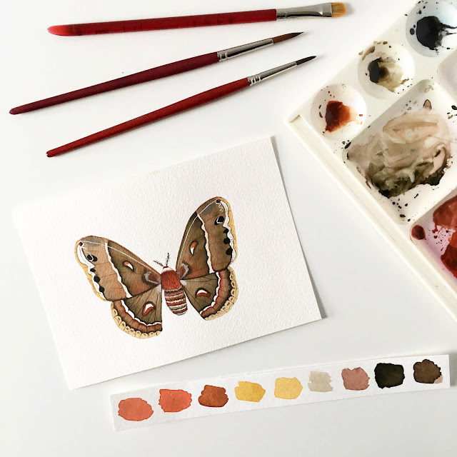 watercolor, watercolor painting, watercolor illustration, moths, cecropia moth, Anne Butera, My Giant Strawberry