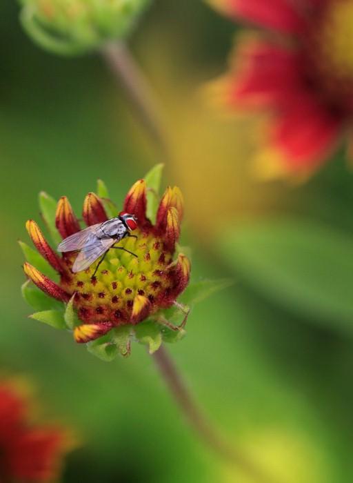 Необычные фотографии насекомых 14