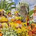 Festa da Flor promete colorir ao longo de 4 semanas