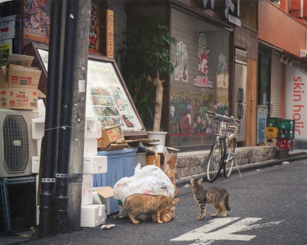cats stealing food from garbage bag
