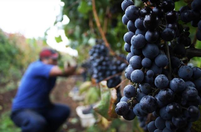Visitar as vinícolas em Santiago no mês de março