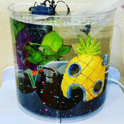 My first aquarium for betta fish with gravel, silk plants, and Sponge Bob pineapple house
