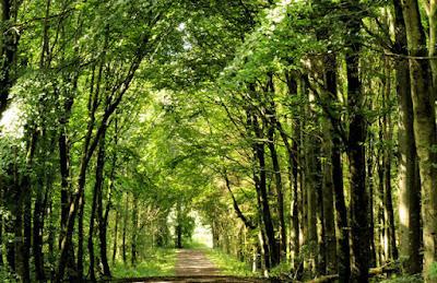 Path Through The Forest HD Desktop Wallpaper