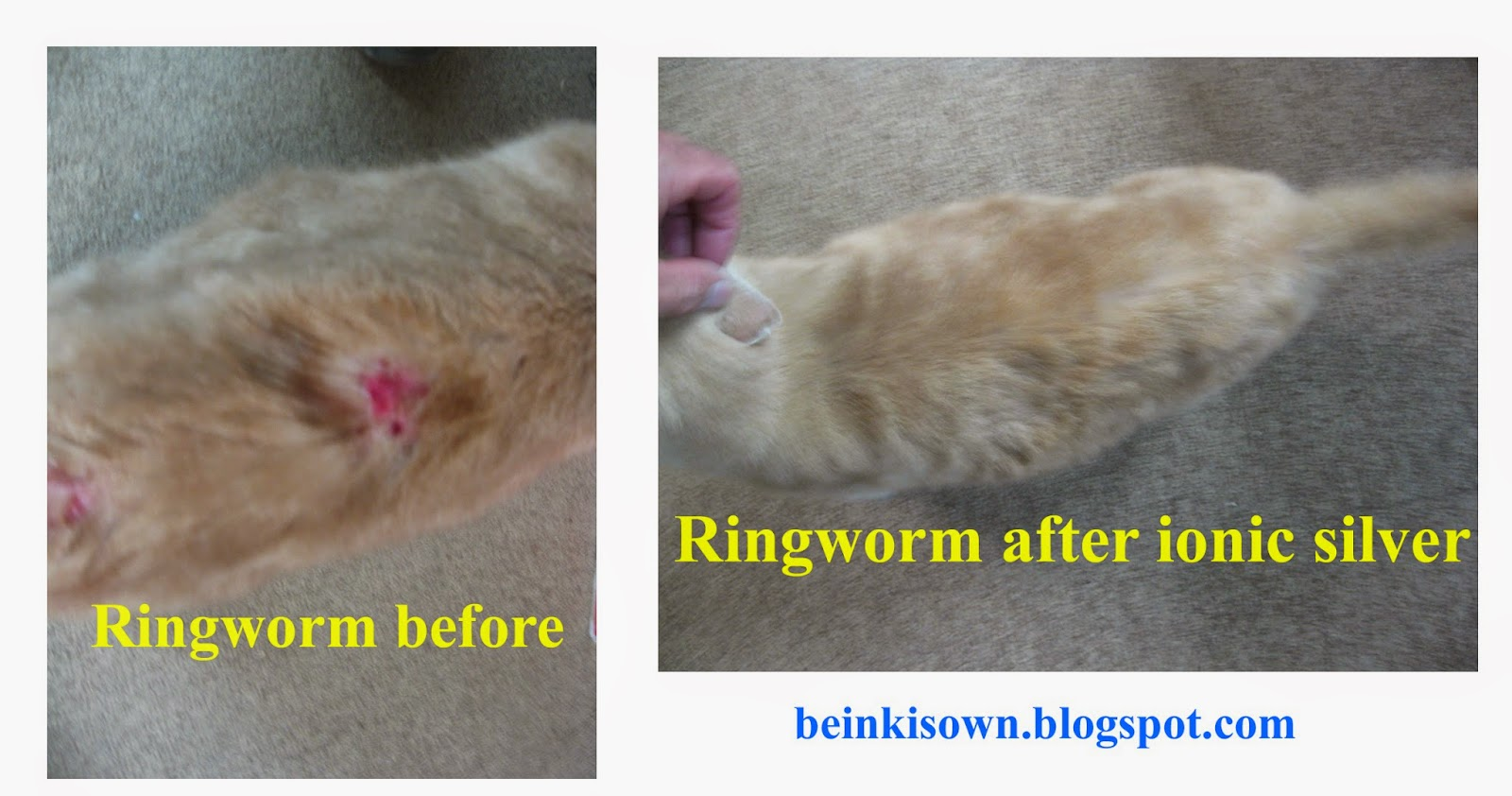 Beinki's Own Colloidal Silver: Colloidal Silver stops ringworm in cat