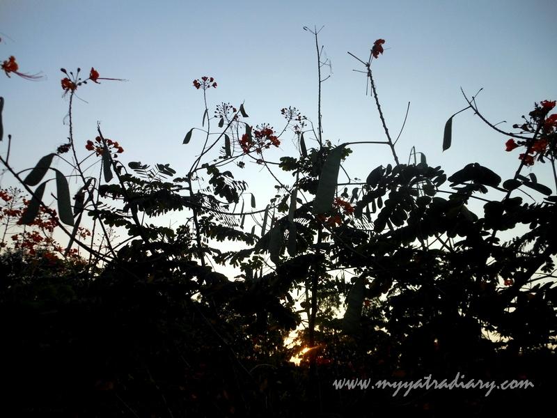 Floral bloom at Shaniwar wada fort, Pune