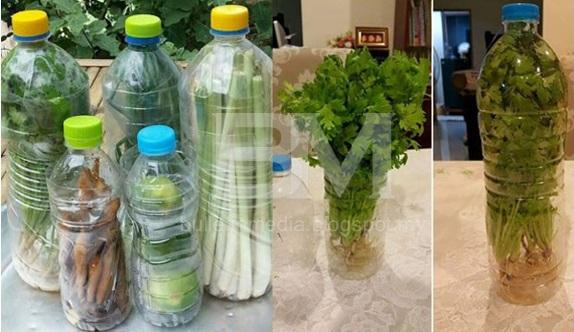 Sangat BERKESAN! Sayur Tahan Lebih Lama & Segar Hanya Menggunakan Botol Air Minuman Terbuang!