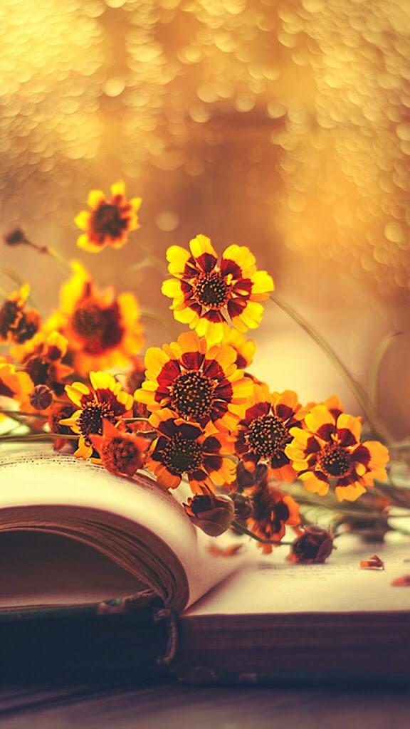 صور وخلفيات صورة باقة ورد اصفر فوق كتاب بدقة عالية للتصميم