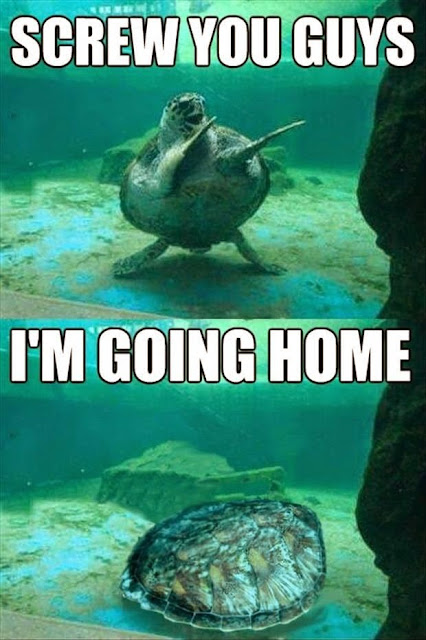 Funny Going Home Turtle Joke Picture