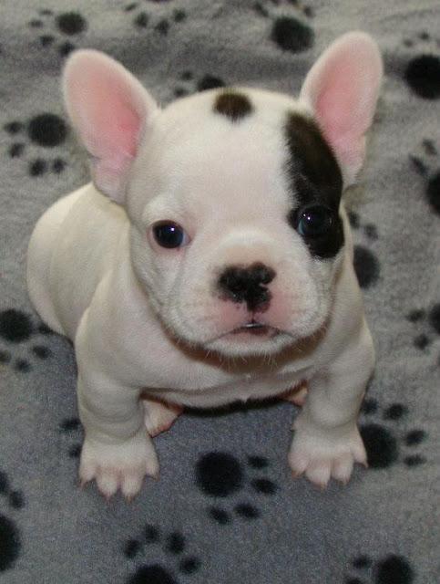 http://kongxie.blogspot.my/2017/06/10-photo-puppy-anak-anjing-kecil-yang.html