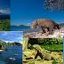 3 Spot Diving Yang Menakjubkan Salah Satunya Adalah Komodo Park