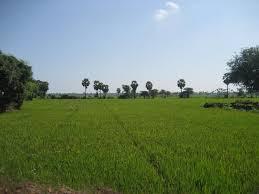 Rupnagar Field