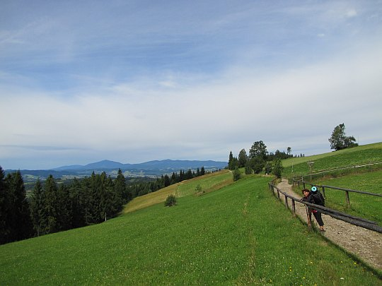 Na polanie Przysłop, niedaleko szczytu Maciejowej (815 m n.p.m.).