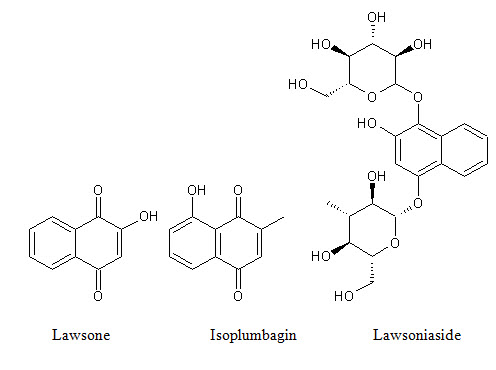 Lawsonia Inermis From Traditional Use To Scientific Assessment