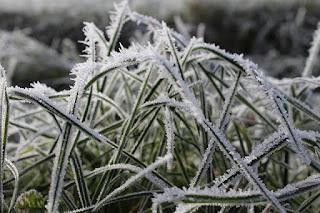 How to Winterize Your Denver Sprinkler System