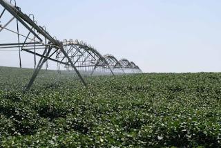 Irrigação de algodão