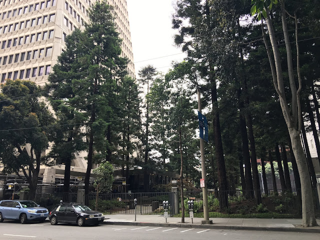 Transamerica Redwood Park in San Francisco's Financial District