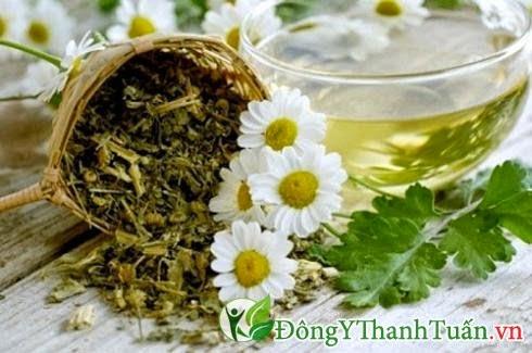 Bài thuốc mát gan giải độc bằng hoa cúc