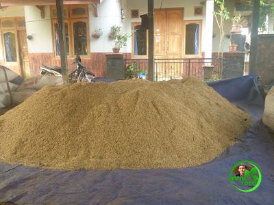 Padi setelah panen dan dijemur di depan rumah petani Desa Bendungan, Pagaden Barat, Yono