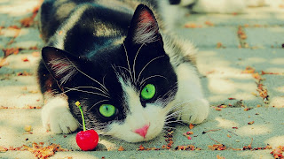 Cats  hd images