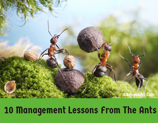 10 Management Lessons From The Ants