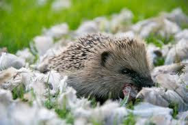 This, the benefits of hedgehog feathers for pregnant women that you should know - Healthy T1ps