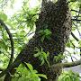 Essaim dans un arbre
